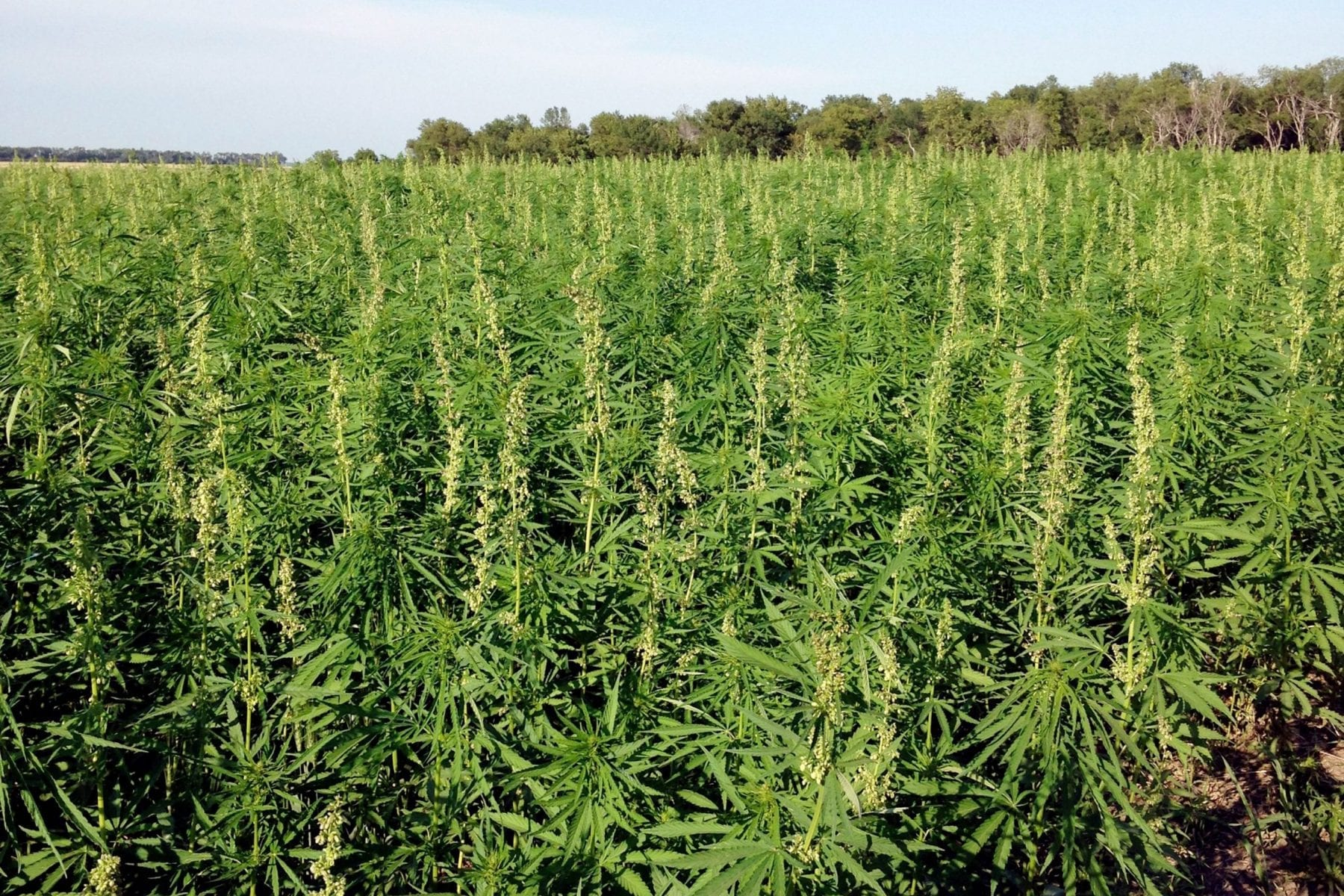 New Guidance on Waste Disposal for Hemp Producers