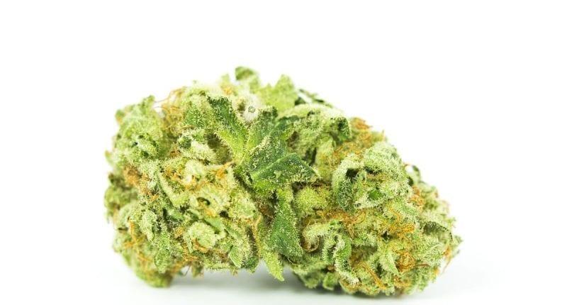 Amnesia-OG-Marijuana-Strain