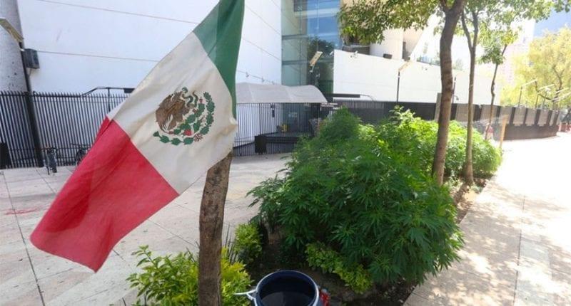 Mexico Passes Cannabis Legalization Bill