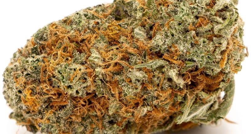 girls scout cookies marijuana strain